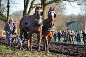 Ouderwets ploegen met paarden